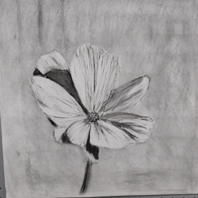 24 x 18 inch paper willow charcoal